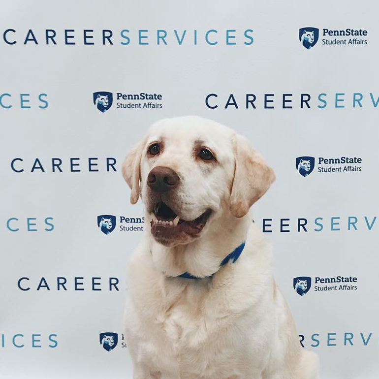 Labrador in front of Career Services sign